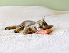 おやすみ中の猫達 02|ねこLatte+
