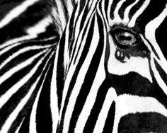 Black & White II (Zebra) Art Print