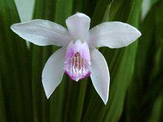 Super Orchideen-Baum-Set 4 wunderschöne orchideenartige Blumen