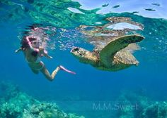 THIS IS AWESOME!!!! Cozumel Cruise Excursions: Snorkeling with Sea Turtle in Cozumel Mexico
