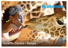 Places to visit! You cannot go to Kenya without visiting the Giraffe Center. There is good information on giraffes available here, and an elevated feeding platform where visitors meet the resident giraffes face to face. #wakanow #DOTW #Kenya