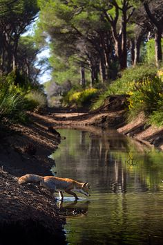 Why did the fox cross the stream? ...Well clearly, to get to the other side!