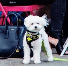 Buddy out in New York - May 12th
