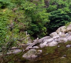 Menstrie - amazing, peaceful Peace, River, Adventure, Amazing, Pictures, Outdoor, Photos, Outdoors, Photo Illustration