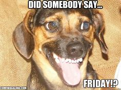 Did Somebody Say Friday!? TGIF! - Come Wag Along