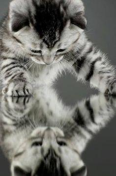 Kitty Cat Reflection…