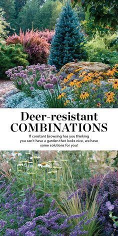 [orginial_title] – Fine Gardening Magazine Deer-Resistant Plant Combinations If constant browsing has you thinking you can't have a garden that looks nice, we have some solutions for you. Deer Resistant Shade Plants, Deer Proof Plants, Deer Resistant Flowers, Deer Resistant Garden, Deer Resistant Perennials, Plants That Repel Deer, Rabbit Resistant Plants, Deer Resistant Landscaping, Landscaping Plants