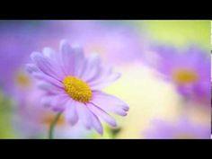 ♥ Méditation du sourire et de l'amour intérieur ♥ - YouTube