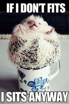 Hedgehog don't care!