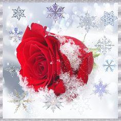 valentine ecards star wars