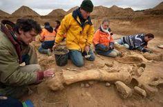 Descubren un esqueleto de mamut en Francia