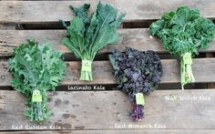 The superfood kale on the side of your plate is one of the most nutrition packed vegetables you can eat! Kale is not just a garnish, it is an edible superfood! Kale Stir Fry, Types Of Kale, Le Chou Kale, Kale Salad Recipes, Kale Salads, How To Cook Kale, Lean Cuisine, Food 101, Unprocessed Food