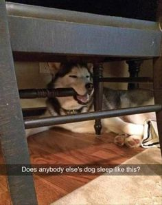 20 Funny Animal Pics for Your Monday