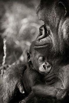 Monkey Mothers love