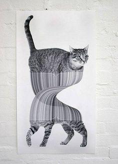 Jonathan Zawada. Graphisme. Chatte. #distorsion http://www.zawada.com.au/