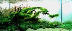 Картинки по запросу оформление аквариума