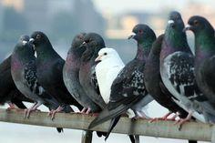 Niños y adultos mayores principales víctimas de enfermedades a causa de palomas