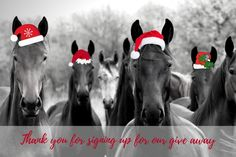 Congratulations! Thanks for spending a small proportion of your day to sign up to the Forageplus whole horse email community. You will now be included in any Forageplus gift prize draws and also receive new Ebooks when we publish them right to your inbox.   To start Forageplus are giving away prizes for 12 days …