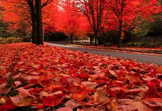 """Tumblr site for """"Scenery Porn"""" as a friend of mine so eloquently put it.    This photo;  Autumn Leaves, The Cascades, Oregon photo via besttravelphotos"""