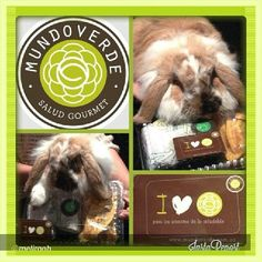 Un conejo que adora a Mundo Verde, ¡Eso hay que verlo! Vota por el en #mimascotamundoverde. Instagram @mundoverdesaludgourmet