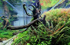 Layout par Aquateddy. #aquascaping #aquarium #fishtank