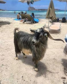 Balos, Creta Crete Island Greece, Greece Islands, Balos Beach, Farm Animals, Cute Animals, Goat Art, Picture Icon, Pattern Images, Greece Travel