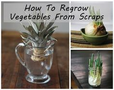 How-To-Regrow-Vegetables-From-Scraps