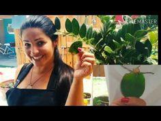 Indoor Garden, Make It Yourself, How To Make, Youtube, Instagram, Gardening, Plants In Bathroom, Indoor Plant Decor, Small Vegetable Gardens