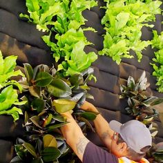 Its a whole new way to think about gardening Grow a living wall