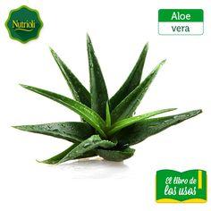 alimentos recomendados contra el acido urico acido urico que alimentos no debo comer zumos para la gota