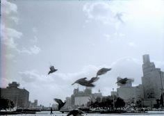 山本悍右 The Birds 1968,  Kansuke Yamamoto.  ©Toshio Yamamoto.