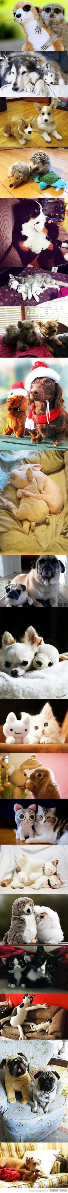 Animals with stuffed animals of themselves…