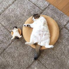 Do we look alike? #Cute #Cats #Animals