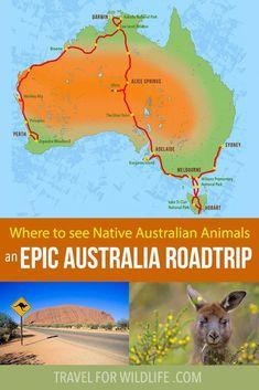 Where to see native Australian animals on an epic Australia roadtrip! Where to see native Australian animals on an epic Australia roadtrip! Roadtrip Australia, Australia Travel Guide, Australia Map, Visit Australia, Western Australia, Melbourne Australia, Road Trip Van, Road Trip Hacks, Road Trips