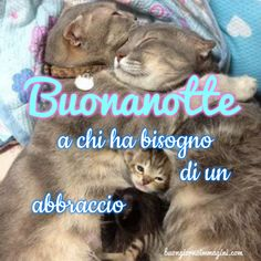 Day For Night, Good Night, Animals And Pets, Dog Cat, Funny, Cute, Cards, Genere, Frames