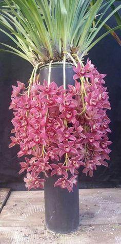 orchids by post john lewis Unusual Flowers, Beautiful Flowers Garden, Types Of Flowers, Flowers Nature, Amazing Flowers, Colorful Flowers, Vanda Orchids, Orchids Garden, Orchid Pot