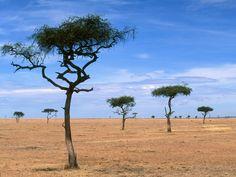 Scattered Acacia Trees Kenya Africa - Africa Photography Desktop