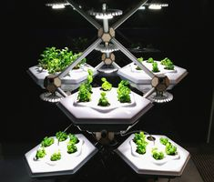 Urban Garden Hexagro Urban Farming has designed the Living Farming Tree, a modular, scalable indoor gardening system.