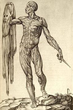 I won't lie, The hard science of human anatomy has been difficult to apply to my soft, right-brained mind for the arts, but my fascination with the artists who created this subject by their beautiful expressions of reality has pulled me through. This image was by one of the world's first anatomists to create a textbook, Andreas Vesalius. He is amazing.