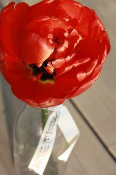 Flower-bottle-wood