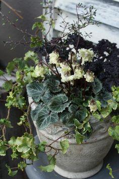 ガーデニング熱 : In the cozy little place Container Flowers, Container Plants, Container Gardening, Garden Urns, Balcony Plants, Plant Design, Types Of Plants, Green Flowers, Garden Styles