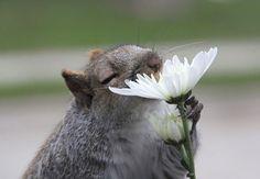 É praticamente impossível resistir ao perfume e à beleza de uma flor. Mas, não é só o ser humano que adora cheirá-las de vez em quando.     Outros animais também param tudo o que estão fazendo