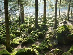 Granges-sur-Vologne, Vosges, France: Champ de roches ressemblant à un fleuve de pierres,  field of rocks looking like a stony river
