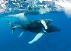 6 Dive Sites for thrilling big-animal encounters