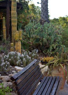 In the Holon cactus park Cactus Park, Outdoor Furniture, Outdoor Decor, Israel, Home Decor, Decoration Home, Room Decor, Home Interior Design, Backyard Furniture