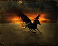 Wallpaper of The Black Pegasus for fans of Fantasy Animals. Pegasus, Fantasy Creatures, Mythical Creatures, Mythological Creatures, African Mythology, Unicorn And Fairies, Winged Horse, Fable, Animal Wallpaper