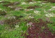 Tapestry lawns Avondale Park, Garden Whimsy, Garden Inspiration, Garden Ideas, Plant Species, Horticulture, Botanical Gardens, Garden Plants, Perennials