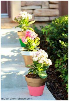 Emérita Desastre: Dale color a tus plantas en primavera