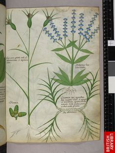 Miniatures of plants, and nuts.   Origin:Italy, N. (Lombardy)