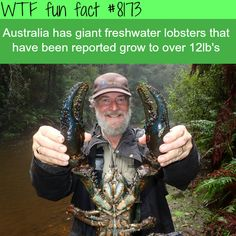 Australia's giant freshwater lobsters - WTF fun fact